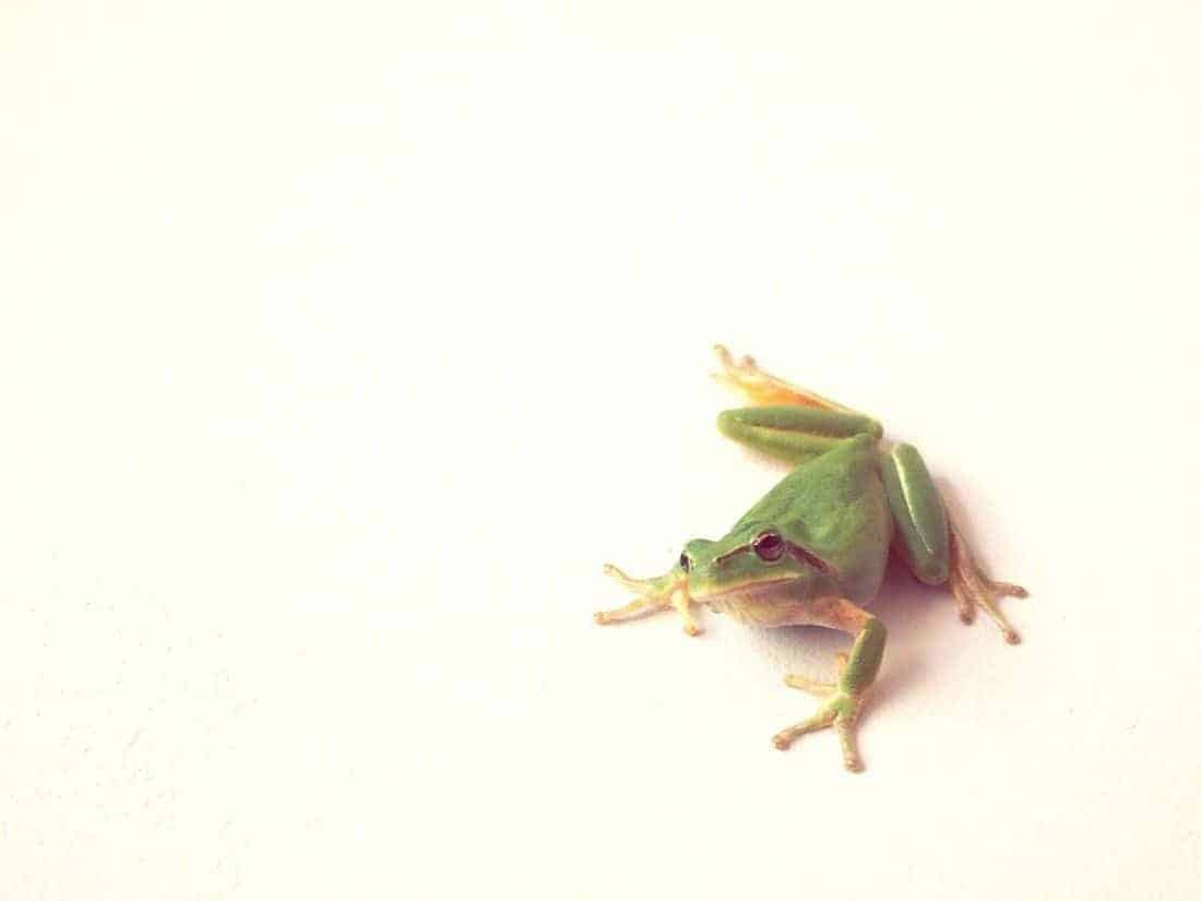 Frog on Sophie's wall, Chateau d'Oléron, FR (2015-06)