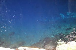Clear blue water in Chinhoyi Caves National Park, Zimbabwe (2012-04)