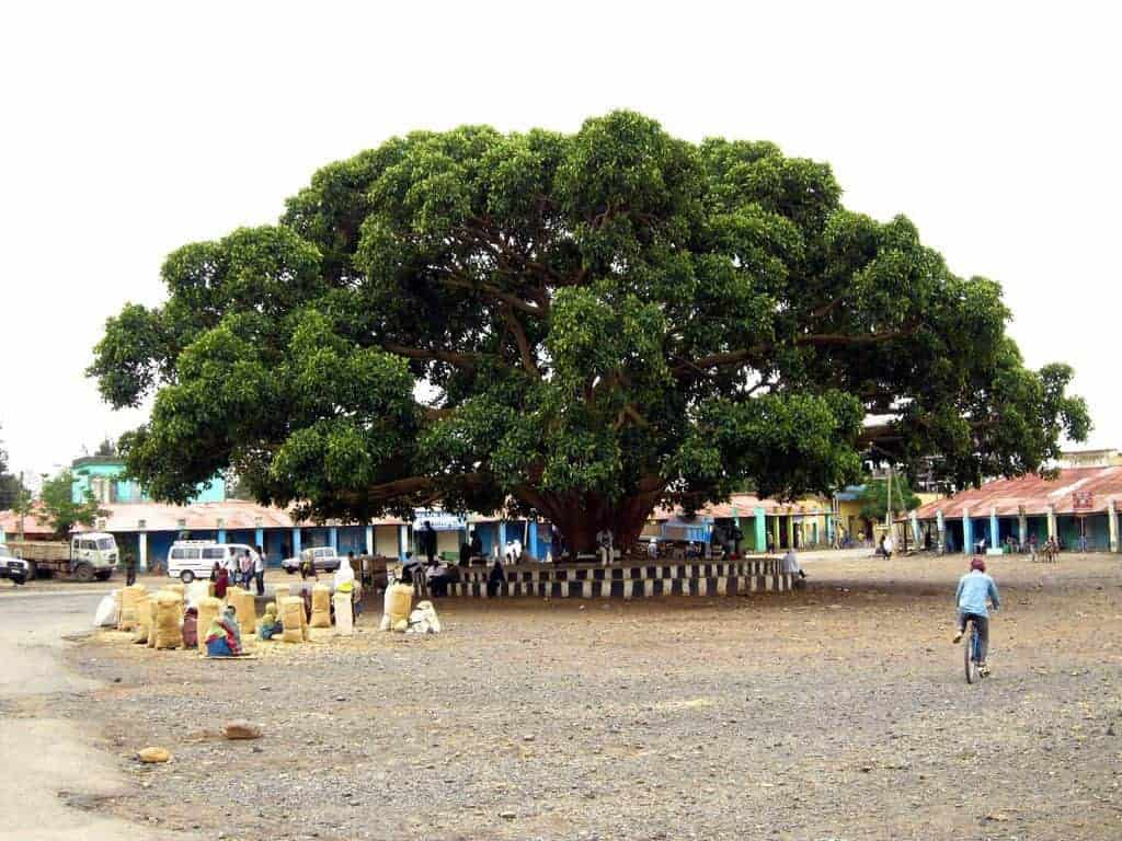 Girls selling tef under a big tree in Axum, Ethiopia (2012-06)