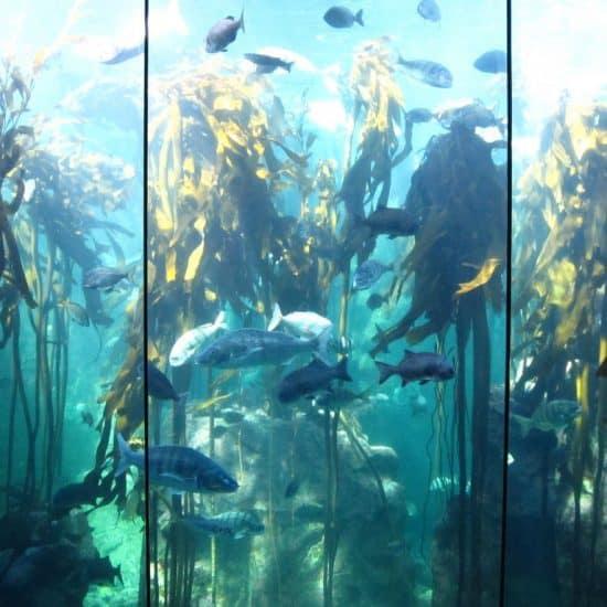 Fish in Two Oceans Aquarium, Cape Town, South Africa (2012-03)