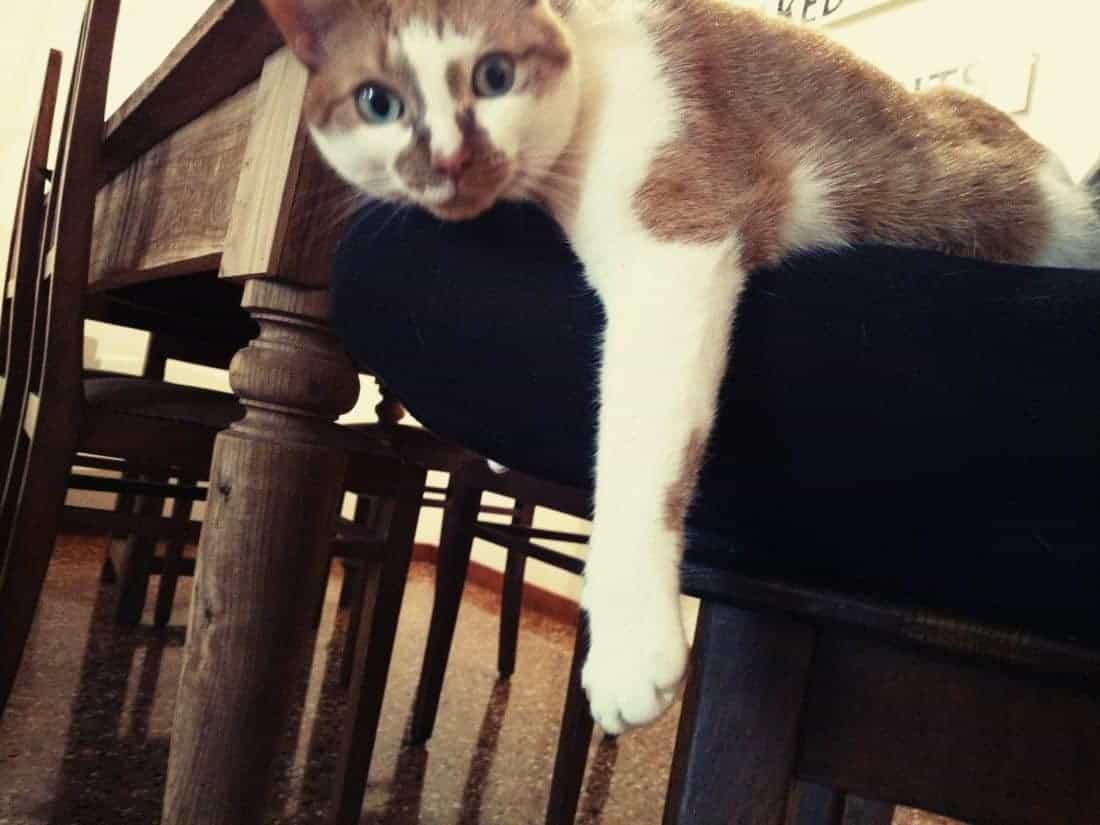 Kiki cat housesitting, Vicenza, IT (2016-01-14)