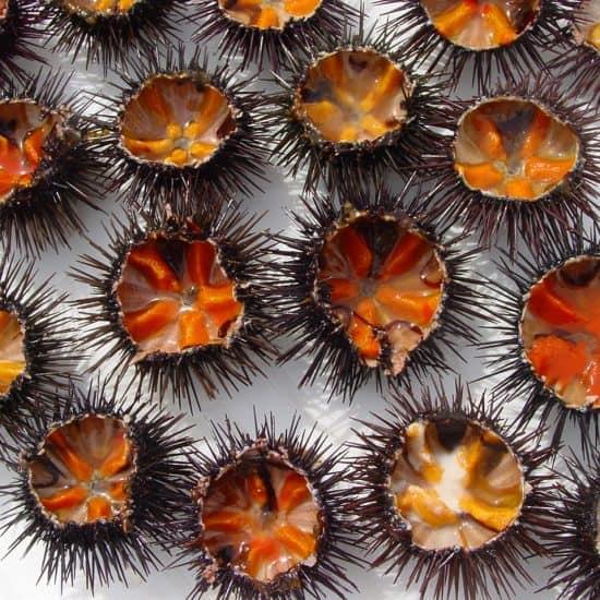 Ricci seafood by Flickr user Lescio