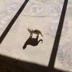 Cat on Byzanthine mosaics in Madaba, Jordan (2016-12-20)