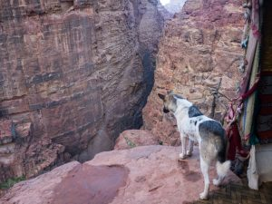 Dog looking down from Treasury view point 1 in Petra, Jordan (2016-12-25)