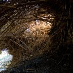 Reed tunnel over the path, Ein Gedi Nature Reserve, Israel (2017-01-04)