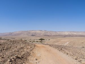 Hiking path towards the only tree in Ramon Crater, Mitspe Ramon, Israel (2017-02-08)