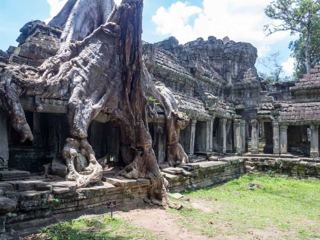 Tree on gallery in Preah Khan temple, Angkor Big Circuit, Siem Reap, Cambodia (2017-04-10)