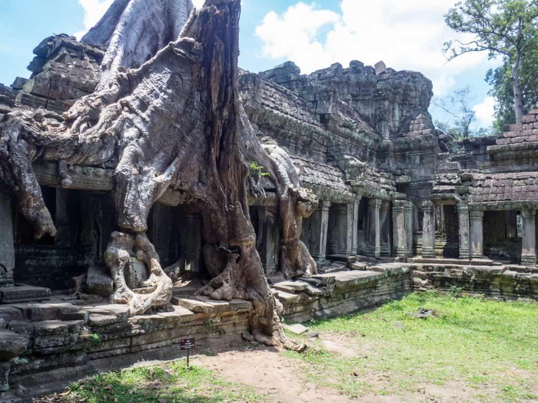 Tree on gallery in Preah Khan temple, Angkor Big Circuit, Siem Reap, Cambodia (2017-04-10)