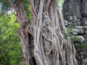 Overgrown gate at Ta Som temple, Angkor Big Circuit, Siem Reap, Cambodia (2017-04-10)