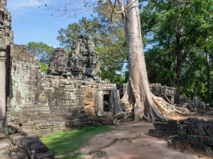 Classic tree in ruin at Banteay Kdei, Angkor Circuit, Siem Reap, Cambodia (2017-04-10)