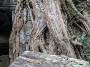 Ta Prohm tree face, Angkor Small Circuit, Siem Reap, Cambodia (2017-04-13)
