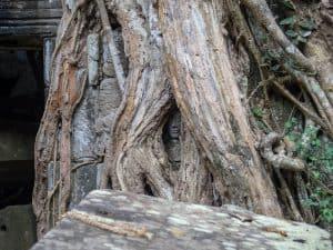 Ta Prohm tree face, Angkor Small Circuit, Siem Reap, Cambodia (2017-04-13)