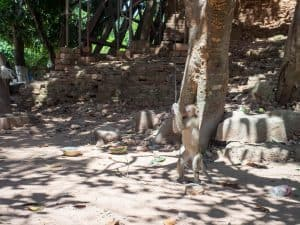 Monkey at Lolei temple, Roluos Group, Angkor, Siem Reap, Cambodia (2017-04-21)