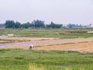 Farmer on a rice field, Hoi An, Vietnam (2017-05/06)