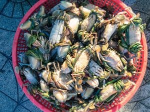 Fresh crabs on the morning market, Hoi An, Vietnam (2017-05/06)