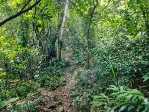 Jungle path at Phong Nha Botanical Garden, Vietnam (2017-06)