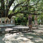 Tree branch support at Tilawkaguru Cave, Sagaing, Mandalay, Myanmar (2017-09)