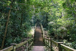 Stairs towards Belalong Canopy Walk during Ulu Temburong National Park tour, Brunei