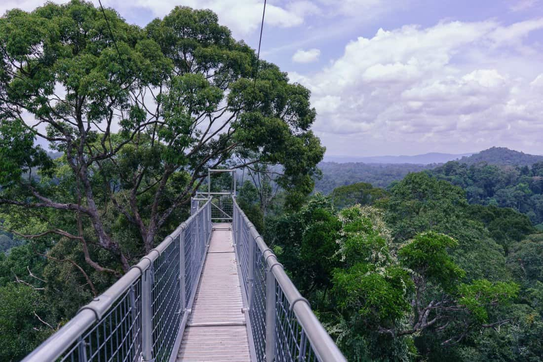 How To Do The Ulu Temburong National Park Tour, Incl  The Canopy Walk