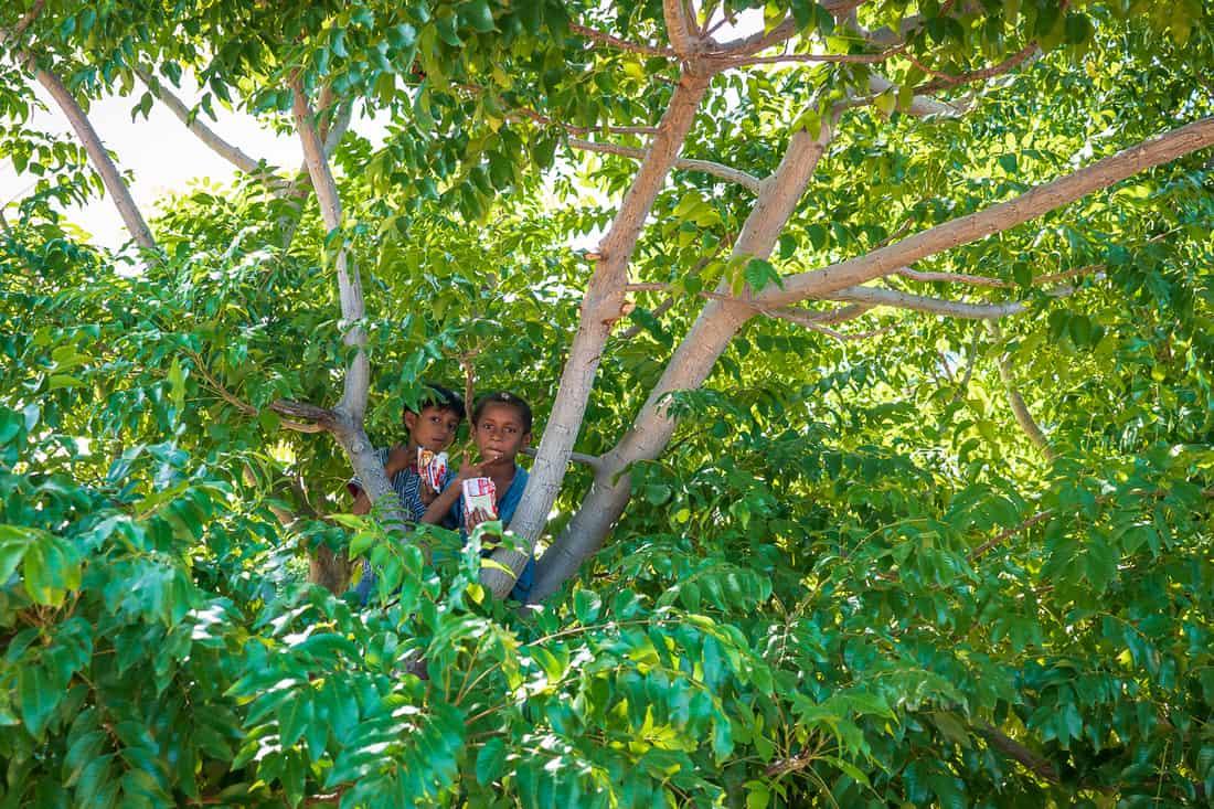 Kids in a tree, Vila, Atauro, East Timor