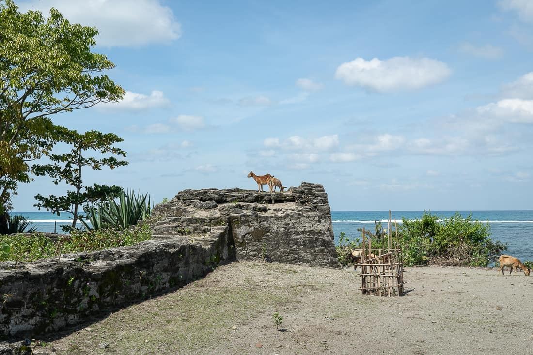 Goats on Portuguese fort ruins at Suai beach, East Timor