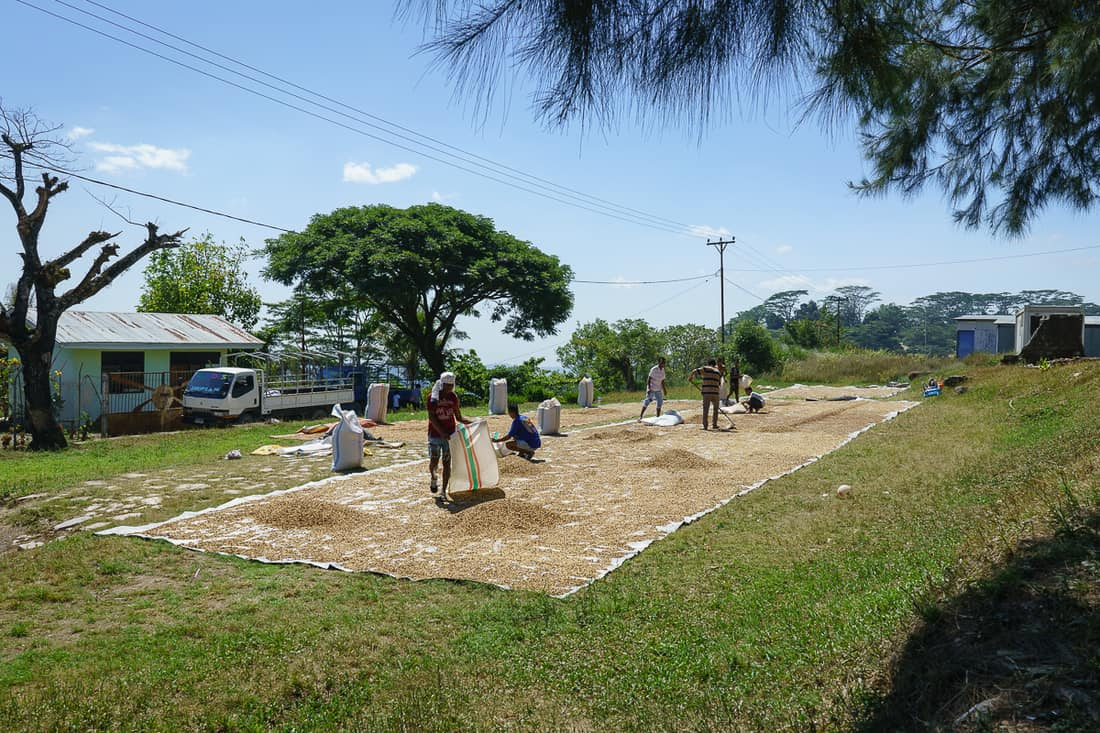Coffee drying in Ermera, East Timor