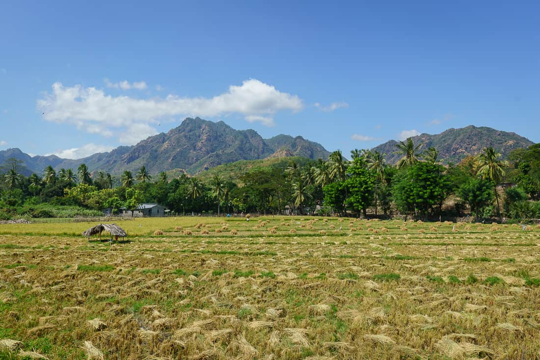 Rice fields, Pante Macassar, Oecusse, East Timor